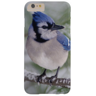 Blue Jay, Cyanocitta cristata Barely There iPhone 6 Plus Case