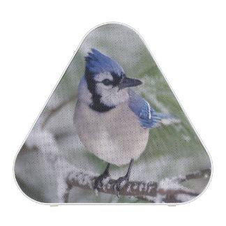 Blue Jay, Cyanocitta cristata Bluetooth Speaker