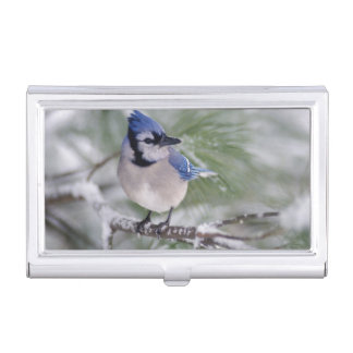 Blue Jay, Cyanocitta cristata Case For Business Cards