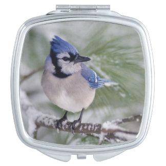 Blue Jay, Cyanocitta cristata Compact Mirror