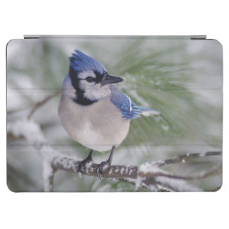 Blue Jay, Cyanocitta cristata iPad Air Cover