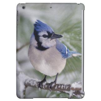 Blue Jay, Cyanocitta cristata Cover For iPad Air