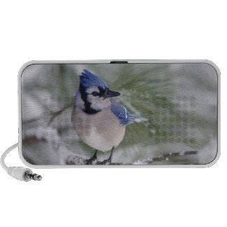 Blue Jay, Cyanocitta cristata Portable Speaker