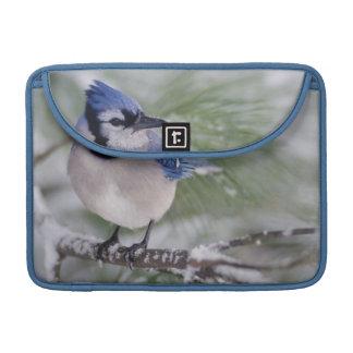 Blue Jay, Cyanocitta cristata Sleeves For MacBook Pro