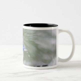 Blue Jay, Cyanocitta cristata Two-Tone Coffee Mug