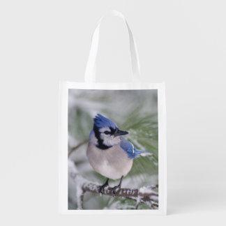 Blue Jay, Cyanocitta cristata Reusable Grocery Bags