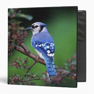 Blue Jay, Cyaoncitta cristata 2 Vinyl Binders