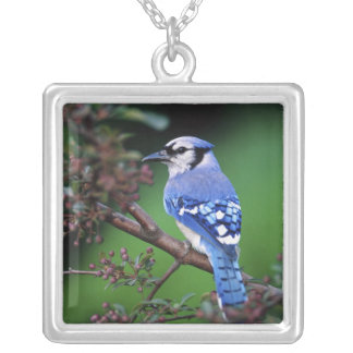 Blue Jay, Cyaoncitta cristata 2 Silver Plated Necklace