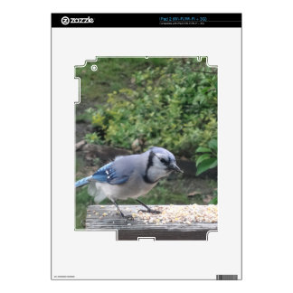 Blue Jay Decal For iPad 2