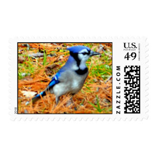 Blue Jay Delight Stamps