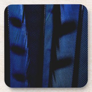 Blue jay feathers beverage coaster