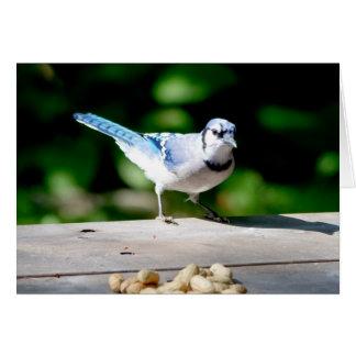 Blue Jay getting a peanut Card