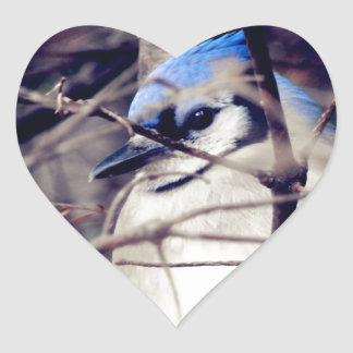 Blue Jay Heart Sticker