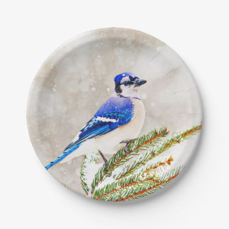 Blue jay in a pine tree with snow paper plate
