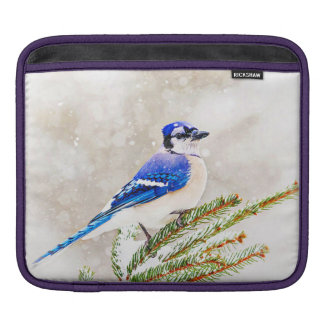 Blue jay in a pine tree with snow sleeves for iPads