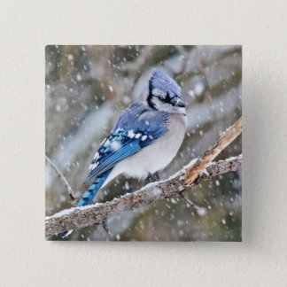 Blue Jay in a Snowstorm Pinback Button