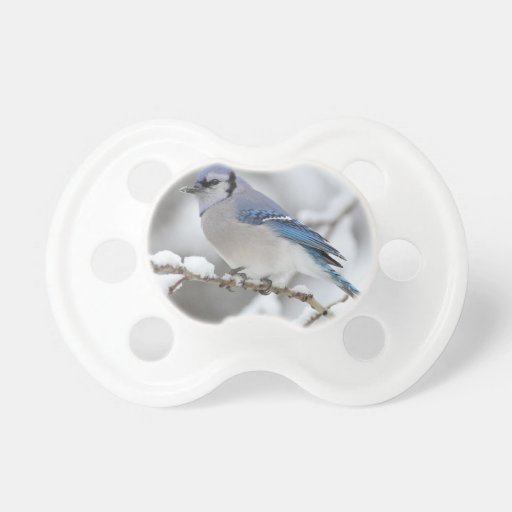 Blue Jay in Algonquin Park Pacifiers