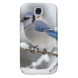 Blue Jay in Algonquin Park Samsung Galaxy S4 Cover