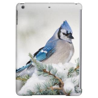 Blue Jay in Blue Atlas Cedar iPad Air Case