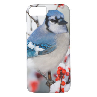 Blue Jay in Common Winterberry iPhone 7 Case