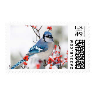 Blue Jay in Common Winterberry Postage Stamp