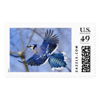 Blue Jay in Flight Postage Stamp