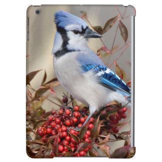 Blue Jay in Nandina Heavenly Bamboo iPad Air Cover