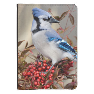 Blue Jay in Nandina Heavenly Bamboo Kindle Cover