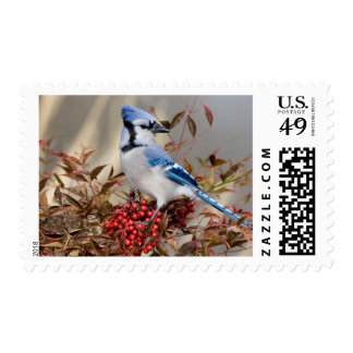 Blue Jay in Nandina Heavenly Bamboo Postage Stamps