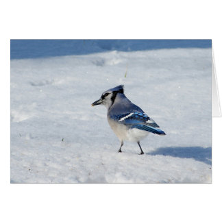 Blue Jay in Snow Holiday Greeting Card