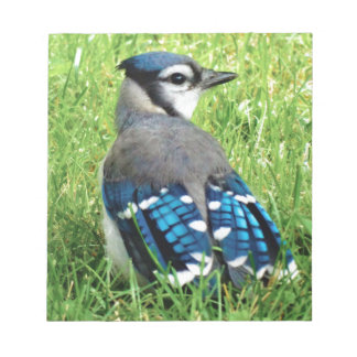 Blue Jay in the Grass Notepad