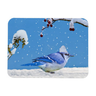 Blue Jay in the Snow Flexible Magnet