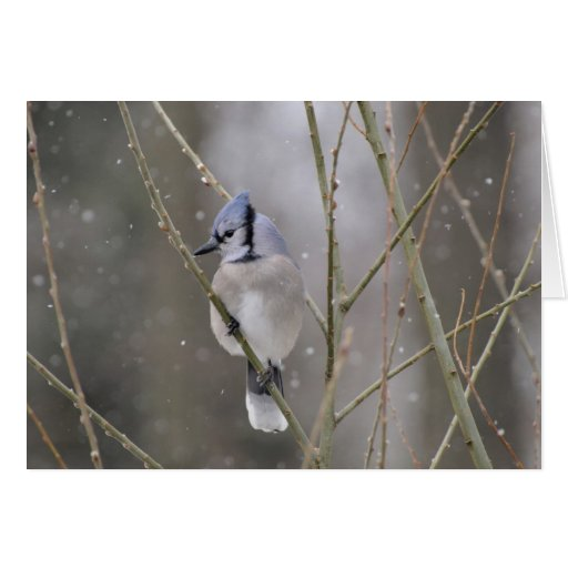 Blue Jay in the Snow Greeting Card