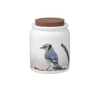 Blue Jay in Winter Candy Jar
