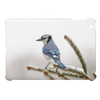 Blue Jay in Winter iPad Mini Case