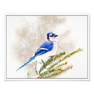 Blue Jay in Winter Photo Print