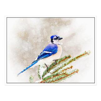 Blue Jay in Winter Postcard