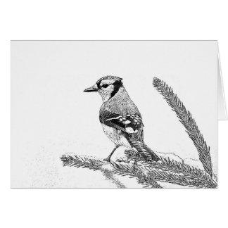 Blue Jay in Winter Sketch Birthday Card