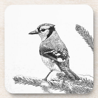 Blue Jay in Winter Sketch Coaster
