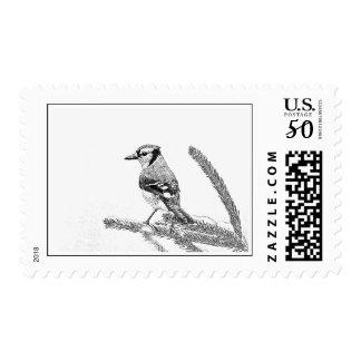 Blue Jay in Winter Sketch Postage