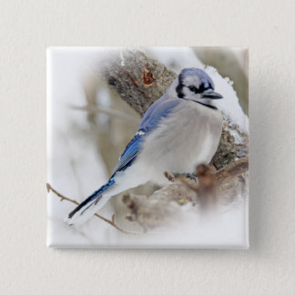 Blue Jay in Winter Snow Pinback Button