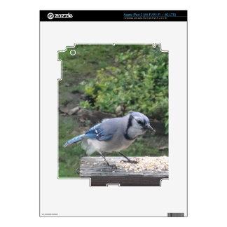 Blue Jay iPad 3 Skins