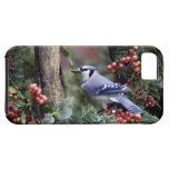 Blue Jay iPhone 5 Covers