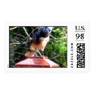 Blue Jay Jay Actual Stamps* Stamp