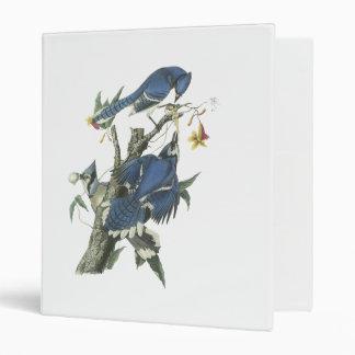 Blue Jay, John Audubon Binder