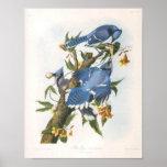 Blue Jay, John James Audubon Fine Art Poster