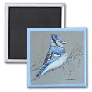 'Blue Jay' Magnet