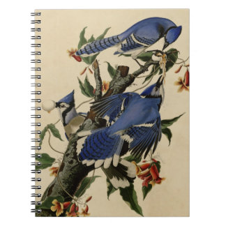 Blue Jay Note Book