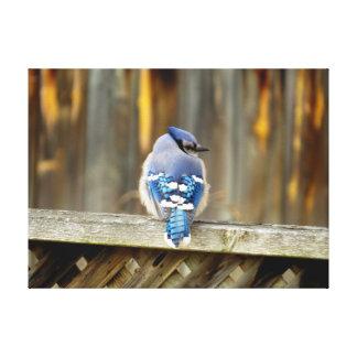 Blue Jay on a Fence Canvas Prints
