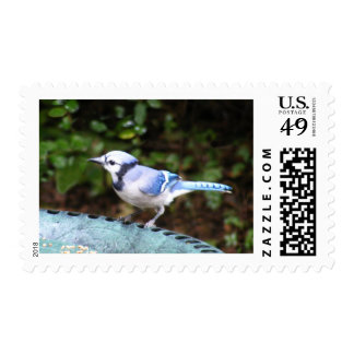 Blue Jay on Bowl Postage Stamps